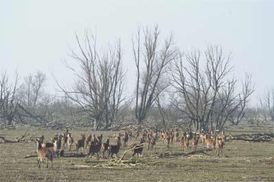 dode dieren oostvaardersplassen